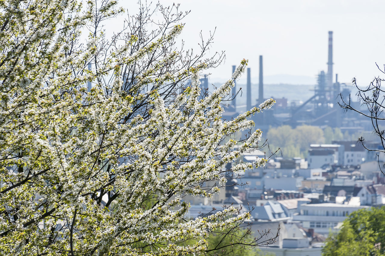 White cherry tree blossom with steel work factory and part of city in smog in background. Ostrava, Czech Republic Architecture Blossom Branch Cherry Blossoms City Cityscape Clear Sky Day Factory Growth Iron Works Nature No People Ostrava Outdoors Petal Sky String Tree