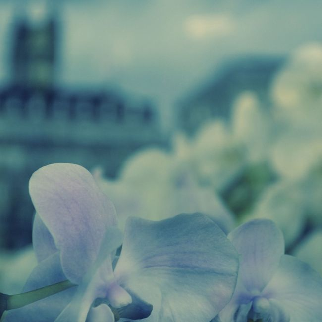 Blue Cyanotype Flowers, Nature And Beauty Flowers_collection Flowerstagram Glassreflections Macro Beauty Macro Nature Macro Photography Macro_collection Paris Reflections