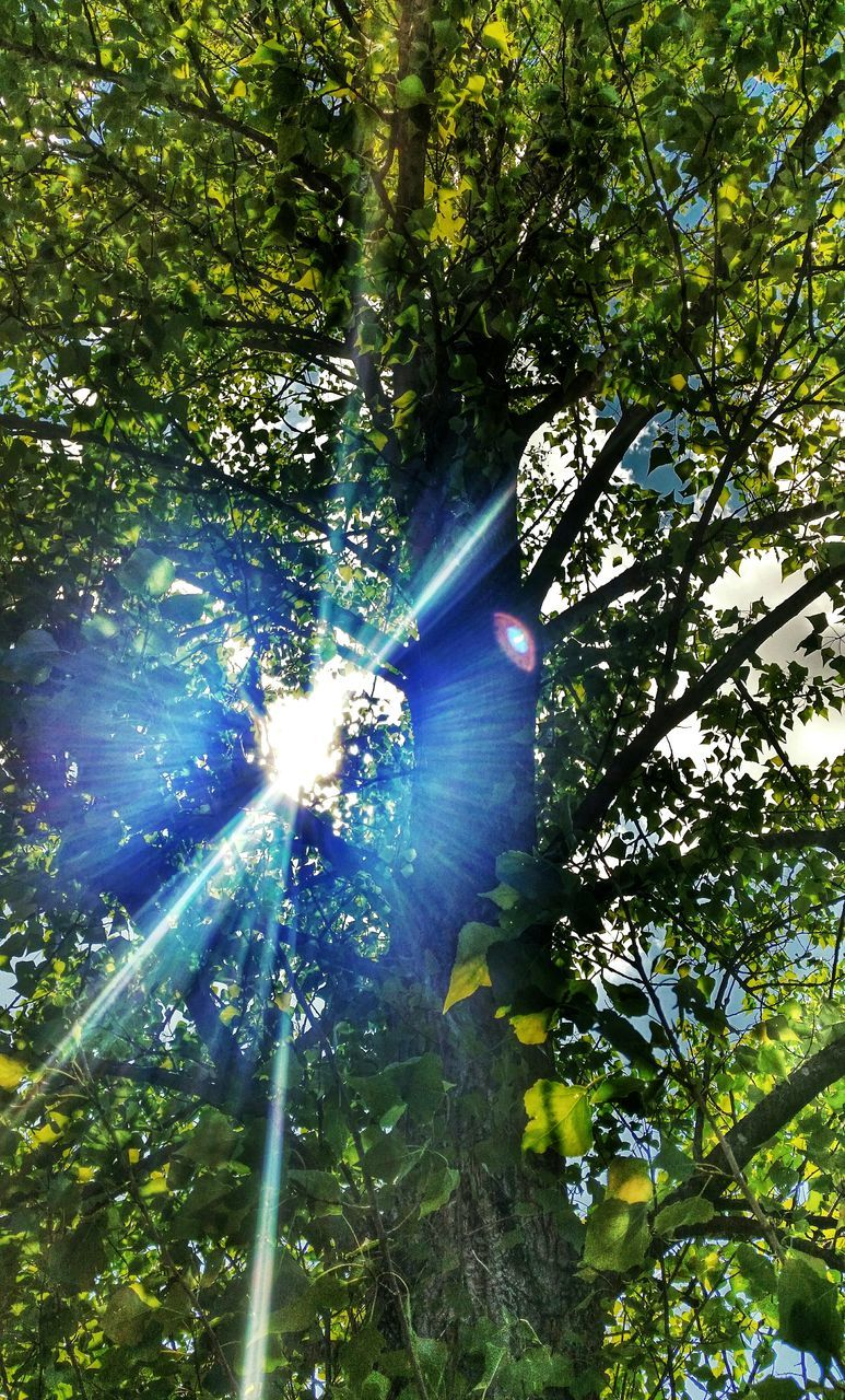 tree, low angle view, sunlight, growth, day, outdoors, nature, forest, green color, beauty in nature, no people, branch, motion