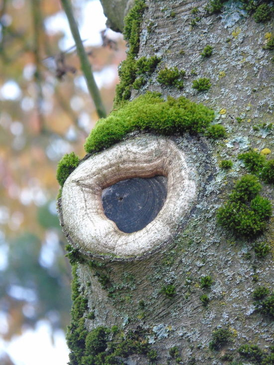Anthropomorphic Face Close-up Day Green Color Leaf My Poin Of View Nature No People Outdoors Tree