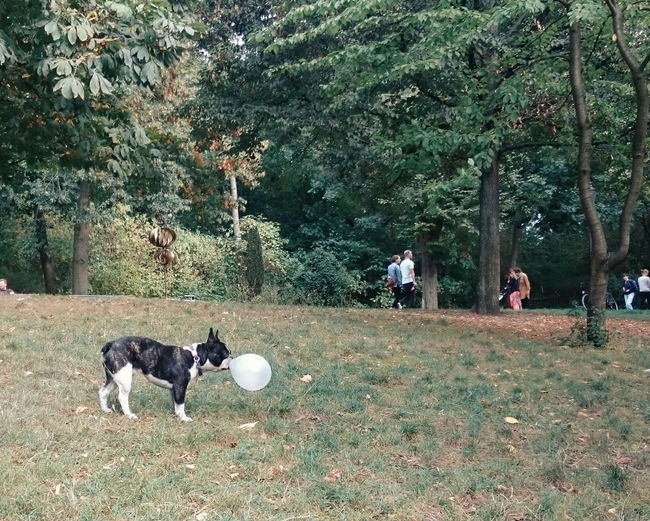 Tree Domestic Animals Mammal Real People Dog Nature Outdoors Growth Pets Men Day Tree Domestic Animals Mammal Real People Dog Nature Outdoors Growth Pets Park Berlin Summer VSCO Vscocam