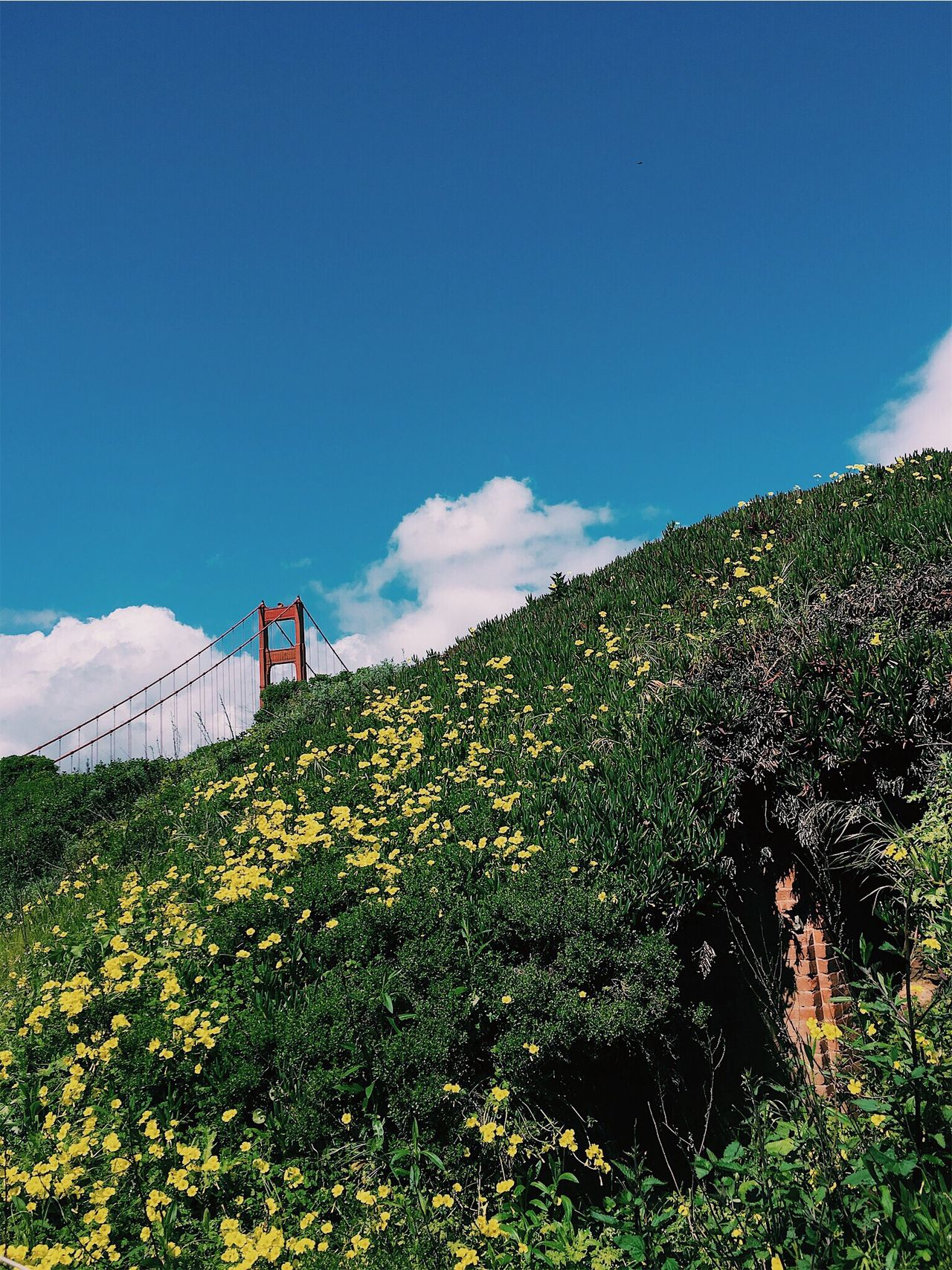 Sanfrancisco Golden Gate Bridge Flowers Yellow Cave The Great Outdoors - 2017 EyeEm Awards