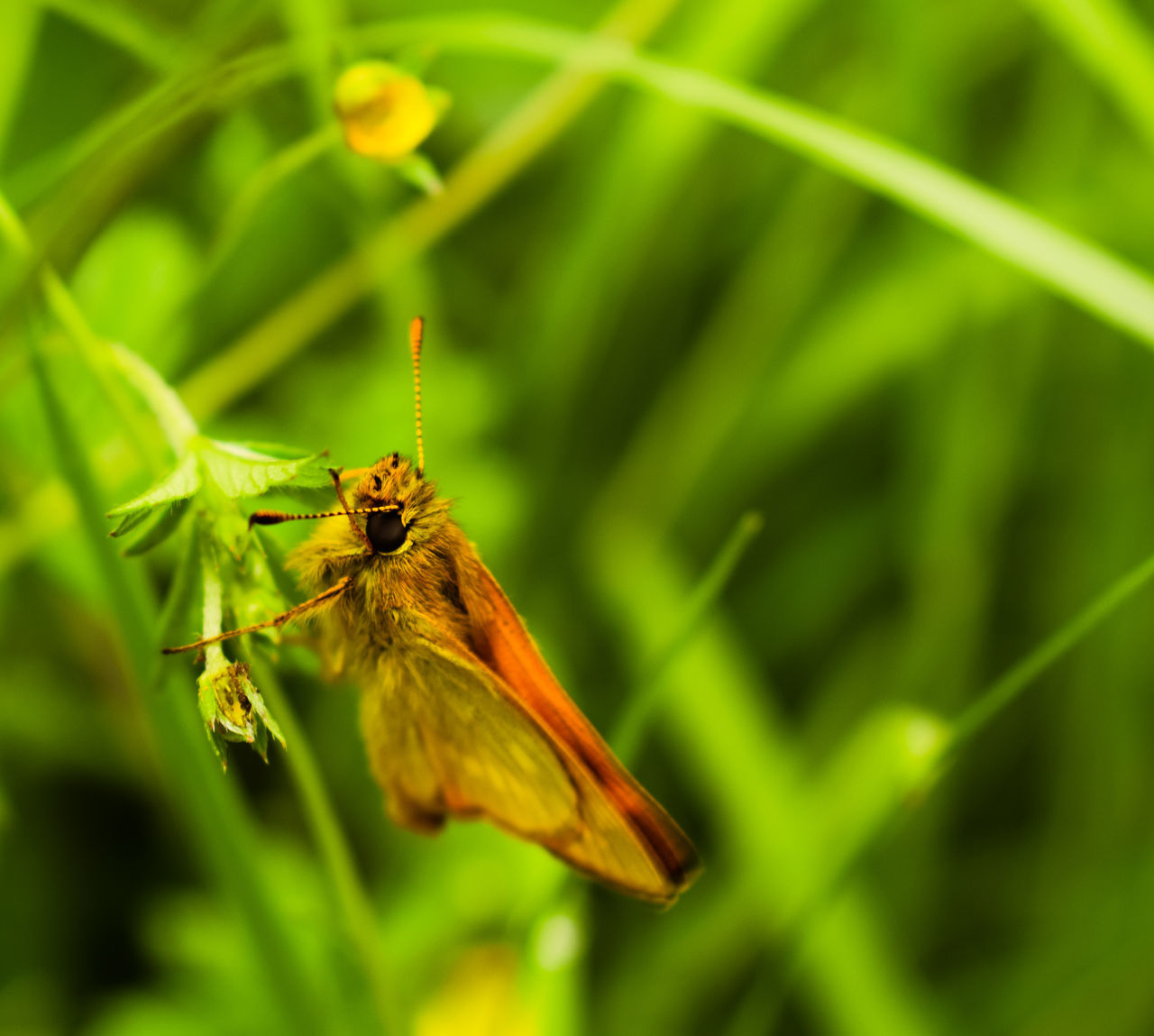 one animal, insect, animal themes, animals in the wild, nature, animal wildlife, green color, close-up, day, plant, no people, growth, outdoors, beauty in nature