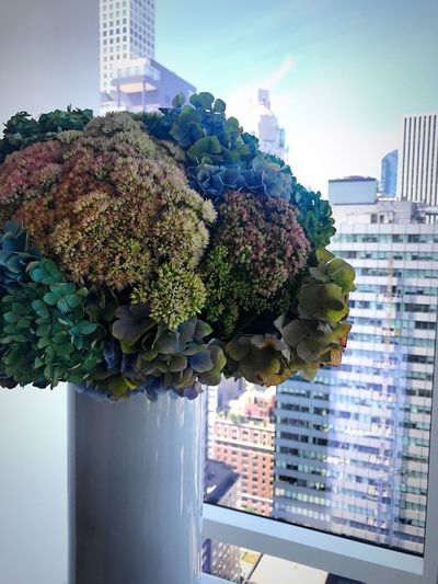 Architecture Building Exterior Skyscraper Built Structure Growth City No People Day Sky Outdoors Cityscape Flower Nature Beauty In Nature Freshness Close-up Bouquet Window Plant Bloom Bloomberg Building