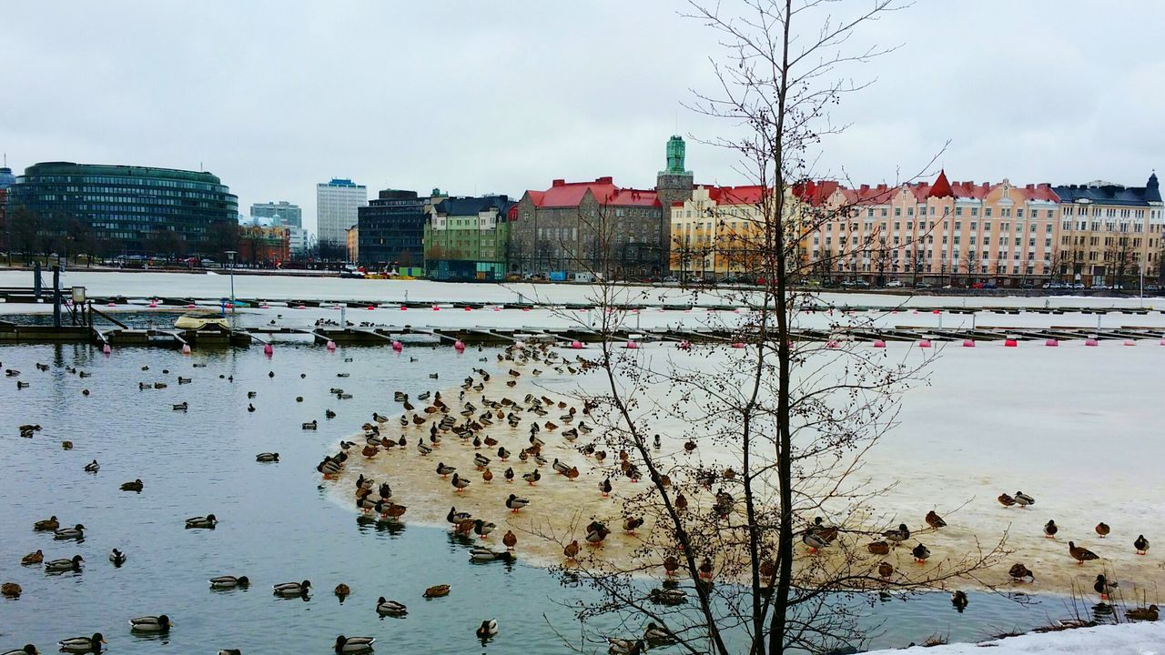 Beautiful stock photos of enten, Animal Themes, Animals In The Wild, Architecture, Building Exterior