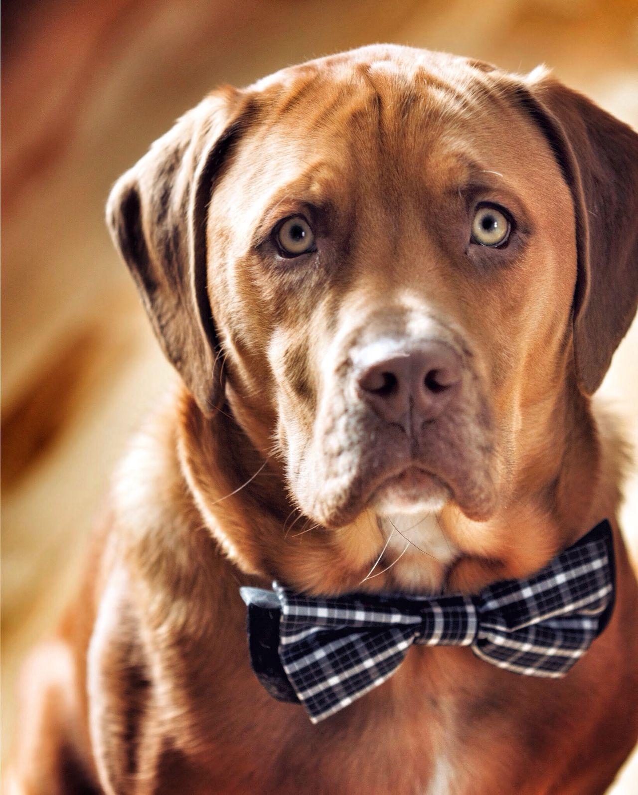 I Love My Dog Dogs Streamzoofamily Cute Pets
