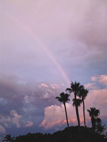 Palm Tree Rainbow Sunset Purple Sky Love