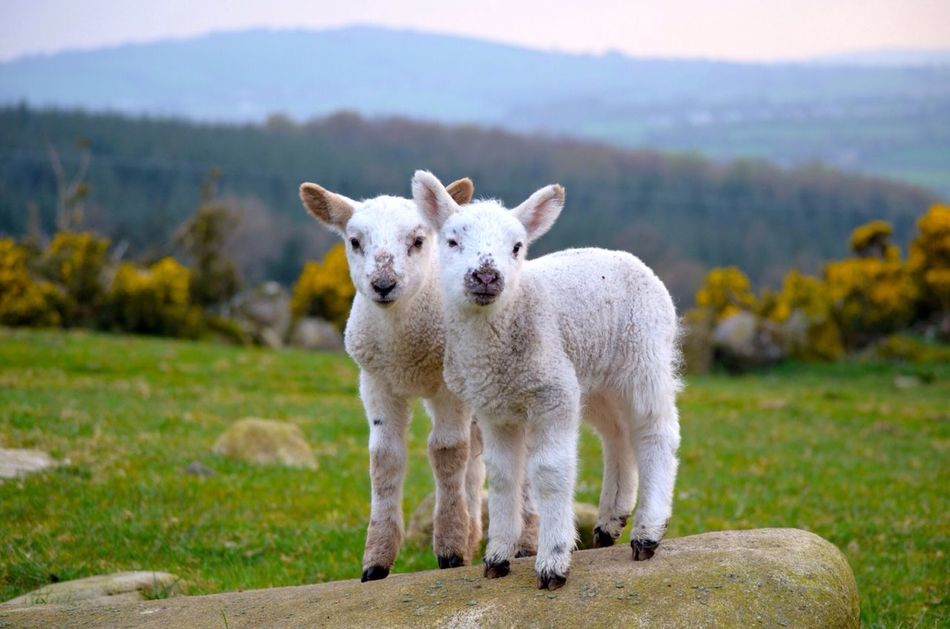 Beautiful stock photos of easter, Animal Themes, Beauty In Nature, Blessington, Day