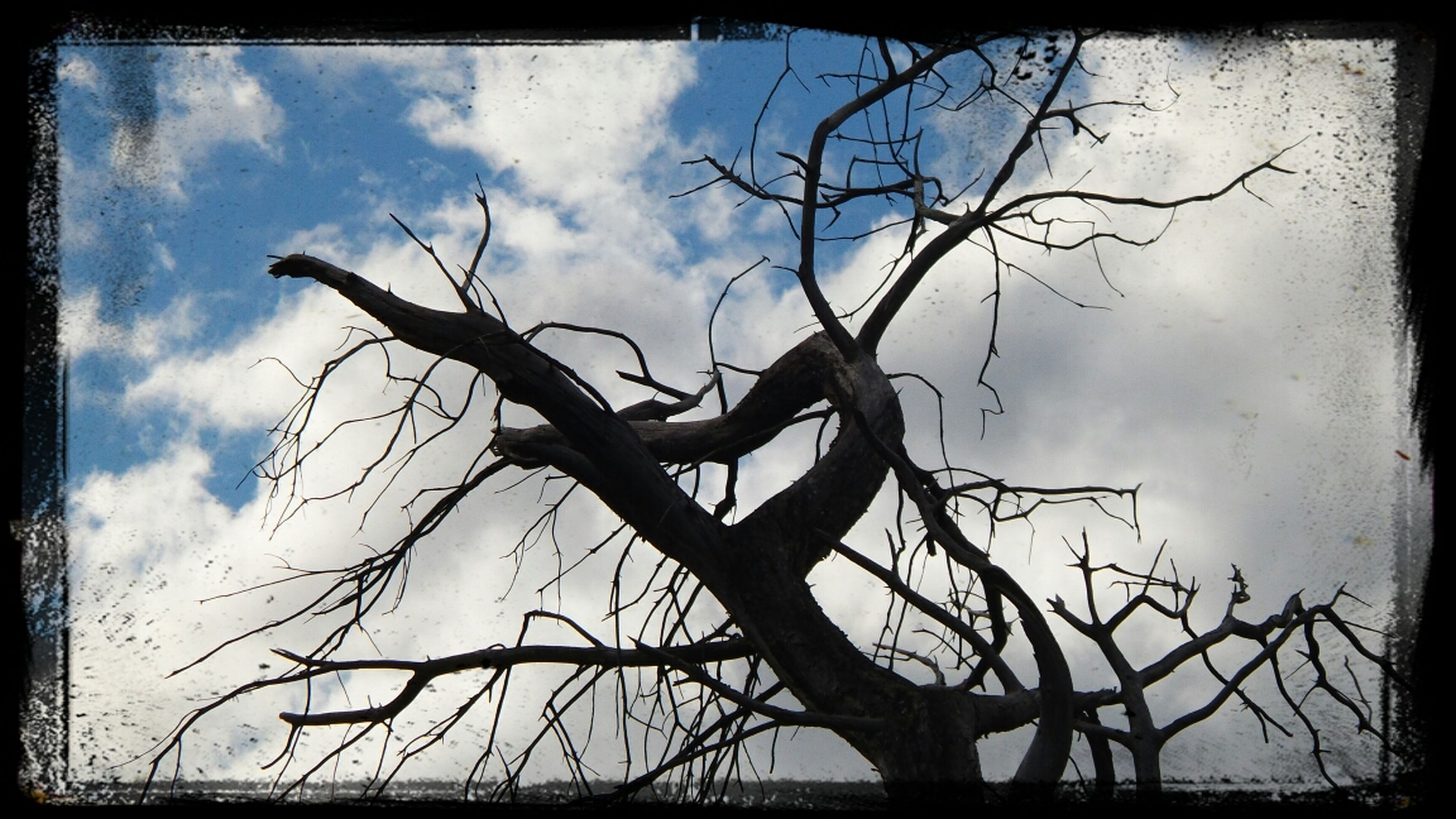 transfer print, bare tree, sky, auto post production filter, low angle view, branch, cloud - sky, tree, cloudy, cloud, nature, silhouette, tranquility, outdoors, dead plant, no people, day, tree trunk, beauty in nature, dusk