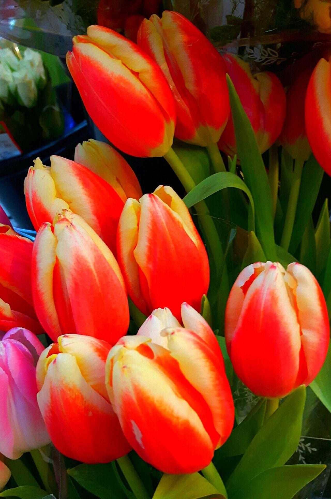 Tulpen Red Market Day Beauty In Nature Flower Head Blumenstrauß Plants And Flowers Flowers_collection Flower Photography Flower_Collection Blumenpracht🌺🍃 Flower Collection Tulpe Photography Flower Plant Flowers,Plants & Garden Beliebte Fotos