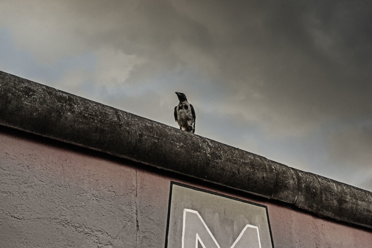 ArtWork Berlin Bird Photography Cloud - Sky Crow No People One Animal Photography Streetphotography