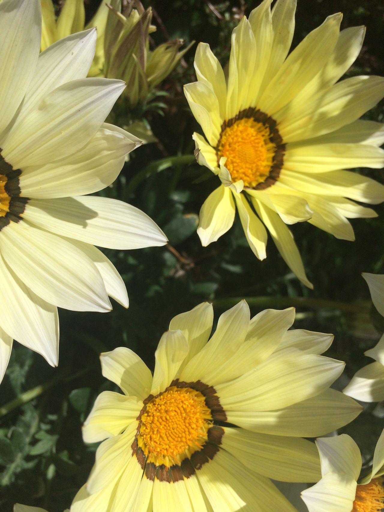 Flower Flower Petal Yellow Fragility Freshness Flower Head Beauty In Nature Pollen Growth Nature Plant Close-up Blooming Day Stamen No People Outdoors