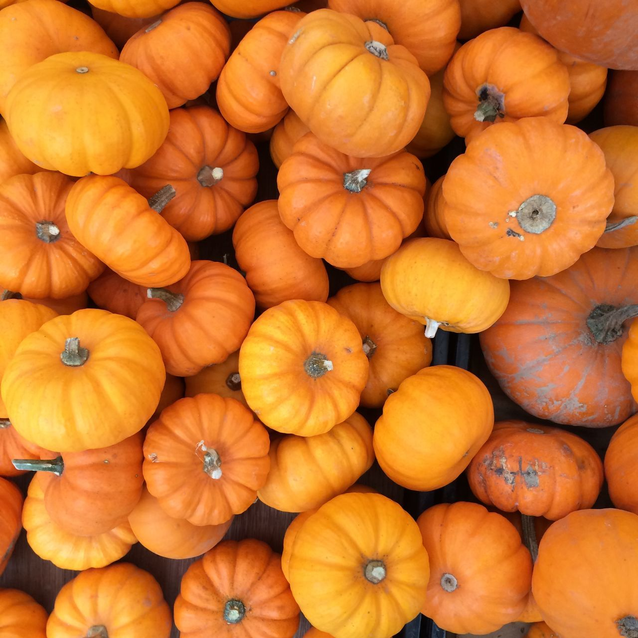 Beautiful stock photos of pumpkin, Arrangement, Backgrounds, Choice, Collection