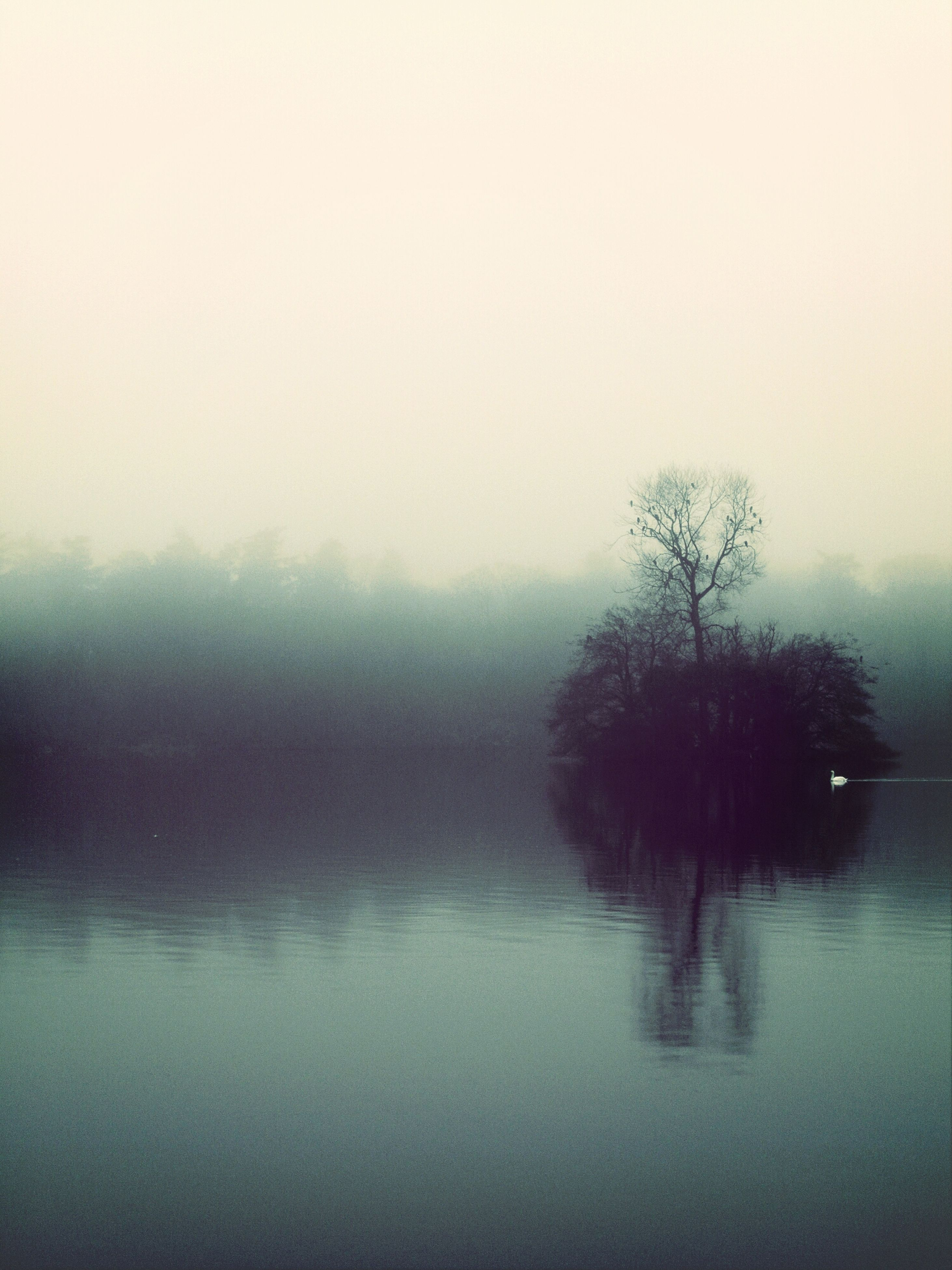 fog, foggy, water, tranquility, tranquil scene, tree, lake, weather, scenics, waterfront, beauty in nature, nature, copy space, mist, reflection, sky, bare tree, idyllic, non-urban scene