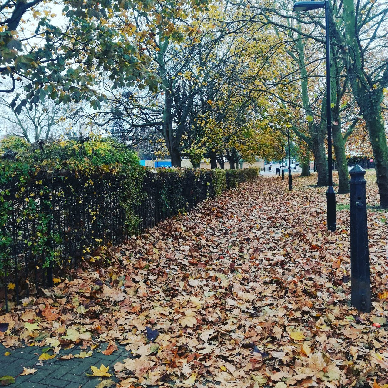 Dry Leaves Fallen In Park During Autumn