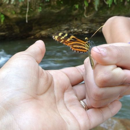 I love it when this happens! Butterfly Hand Nature Sweet
