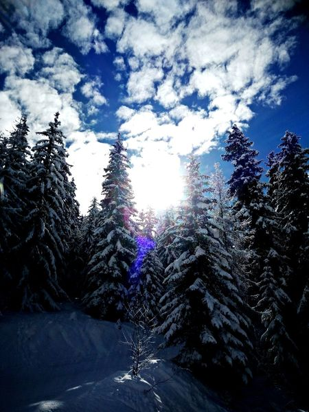 Snow Cold Temperature Winter Tree Nature Sky Landscape Outdoors Winter Eyeem4photography The Week On Eyem Winter Wonderland Traveling Vacations Sunlight Ski Holiday Ski France Alpes Les Arcs