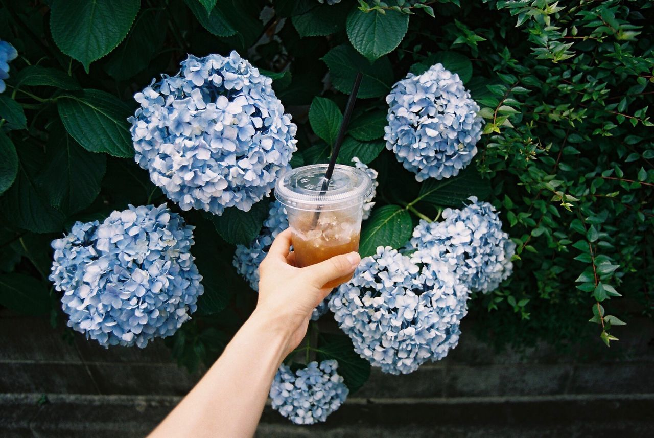Beautiful stock photos of coffee, Beauty In Nature, Blue, Coffee - Drink, Cold Temperature