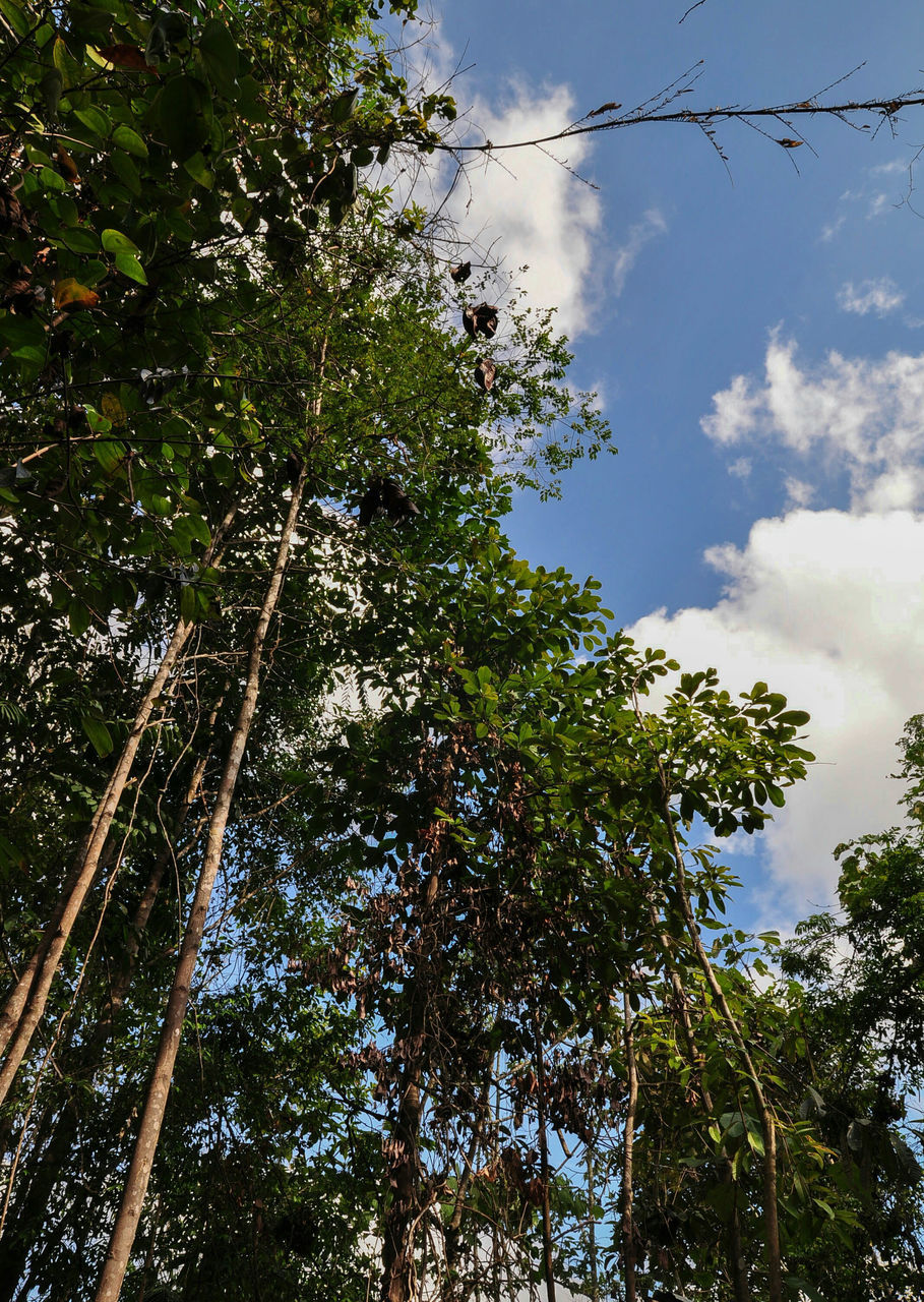 tree, low angle view, nature, growth, sky, beauty in nature, forest, day, no people, branch, outdoors, scenics, blue sky