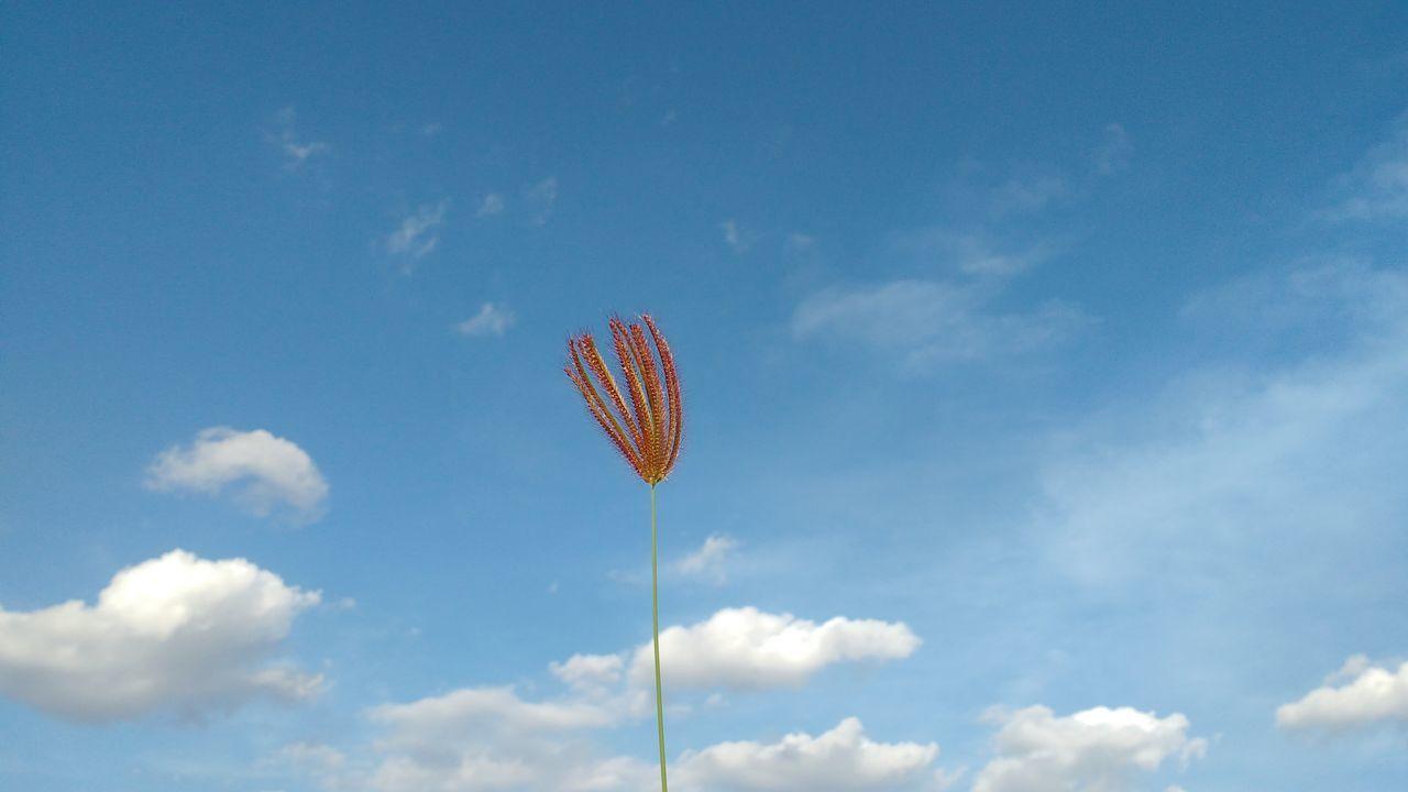 First Eyeem Photo Sky Sky And Clouds Blue Sky Plant Flower Planta Céu Brazil Brasil ♥ Brasilnature Brazil ❤ Brazil Natural Beauty