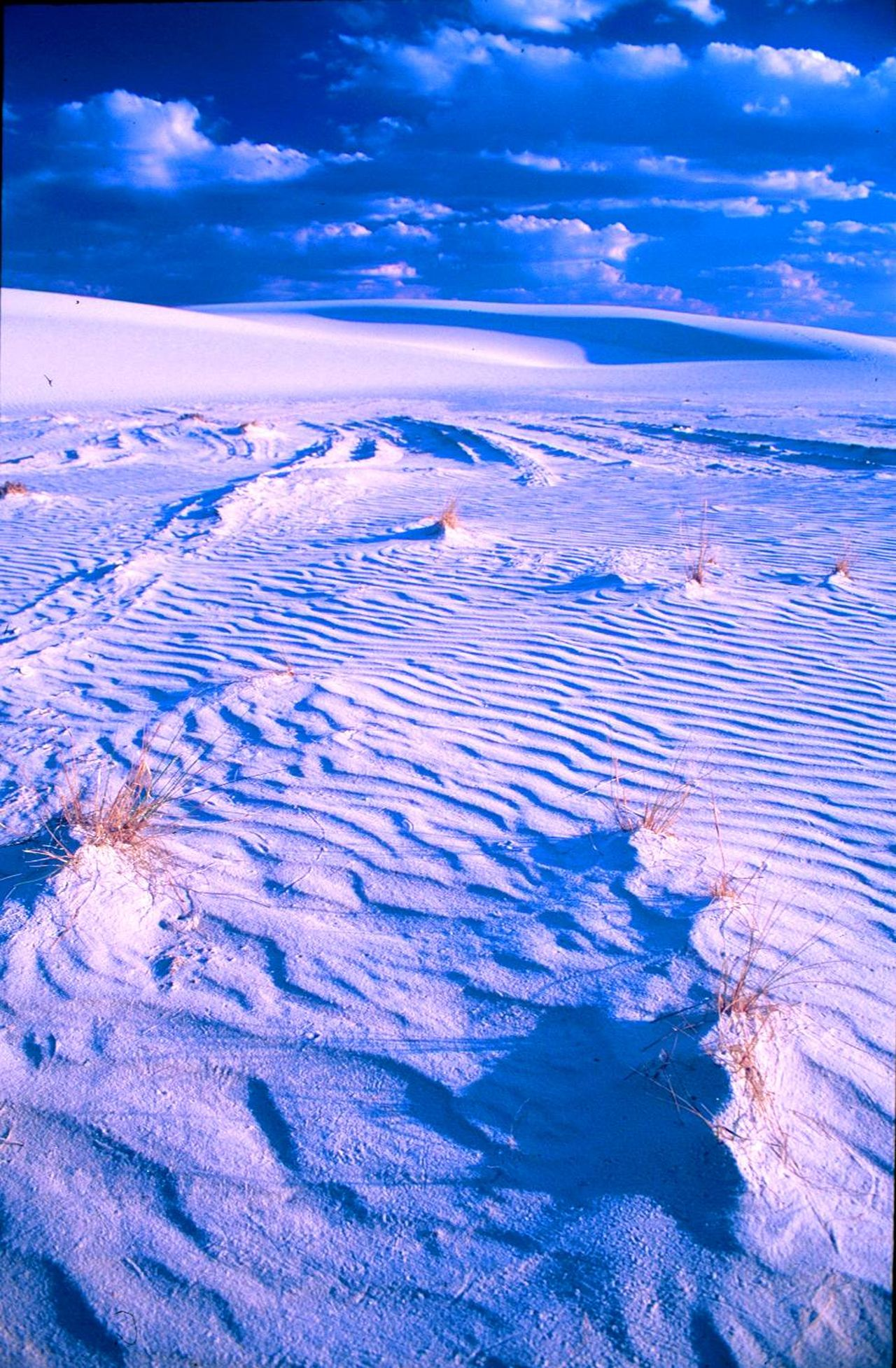 Landscape #Nature #photography Nikon FA Fuji Velvia 50 White Sands N.m.