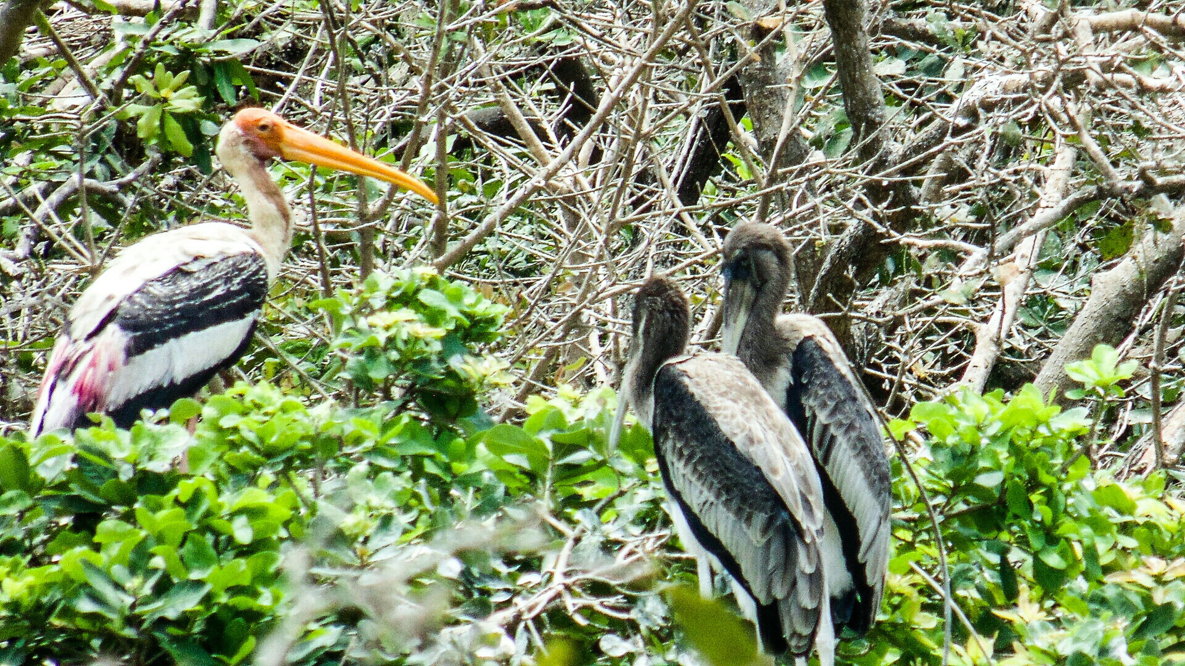 animals in the wild, animal themes, bird, wildlife, tree, perching, one animal, branch, nature, plant, day, green color, outdoors, two animals, full length, growth, no people, low angle view, beak, avian