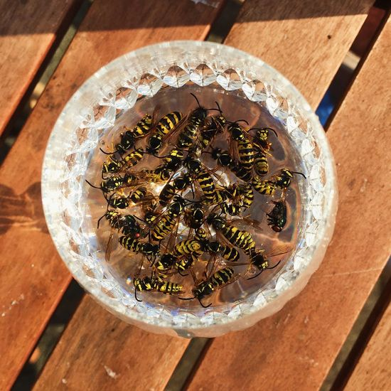 Wasps Cimetery Bugs Still Life Death Note