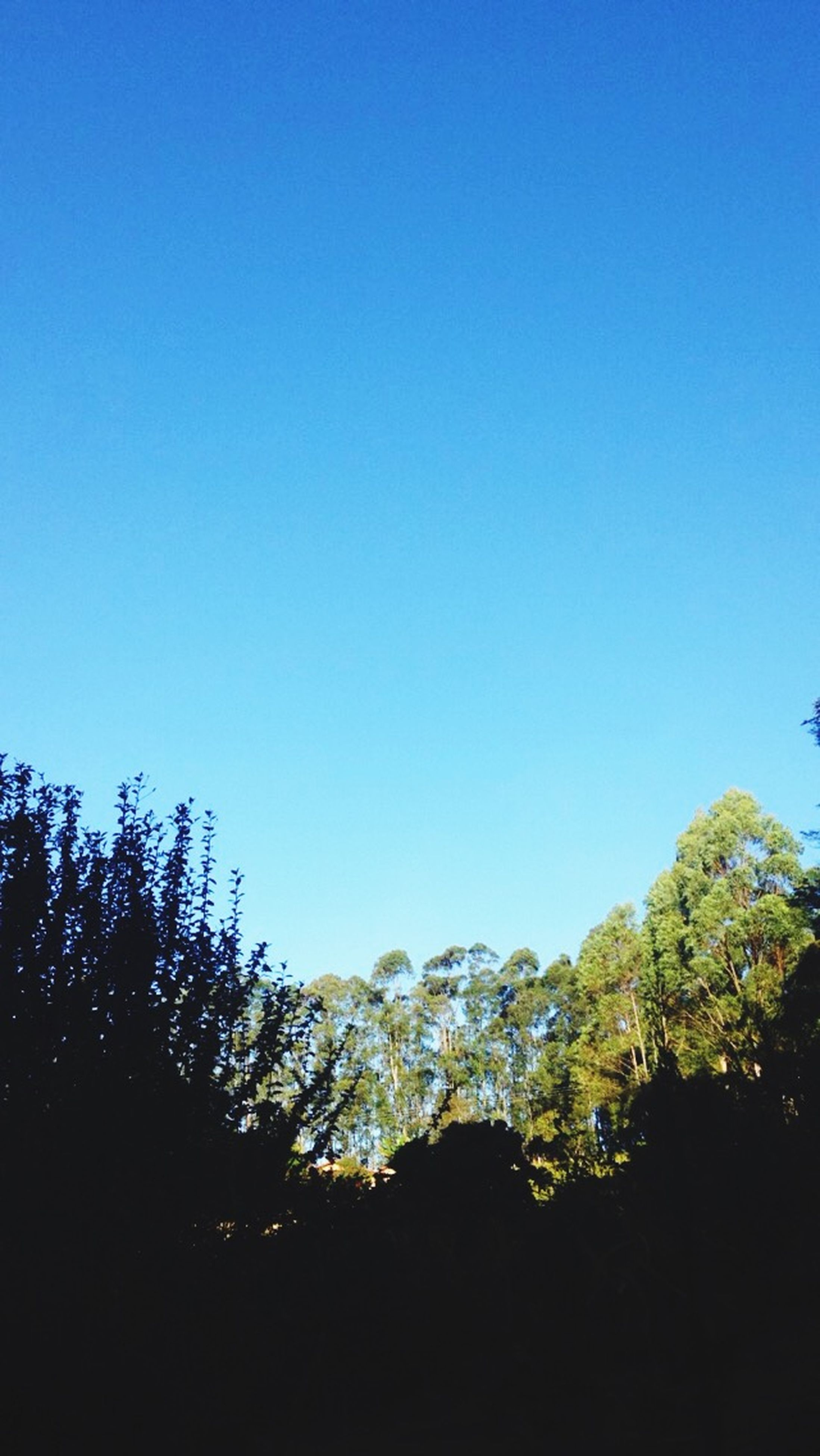 clear sky, blue, copy space, tree, tranquility, beauty in nature, tranquil scene, scenics, low angle view, nature, growth, idyllic, silhouette, outdoors, no people, day, landscape, non-urban scene, high section, sunlight