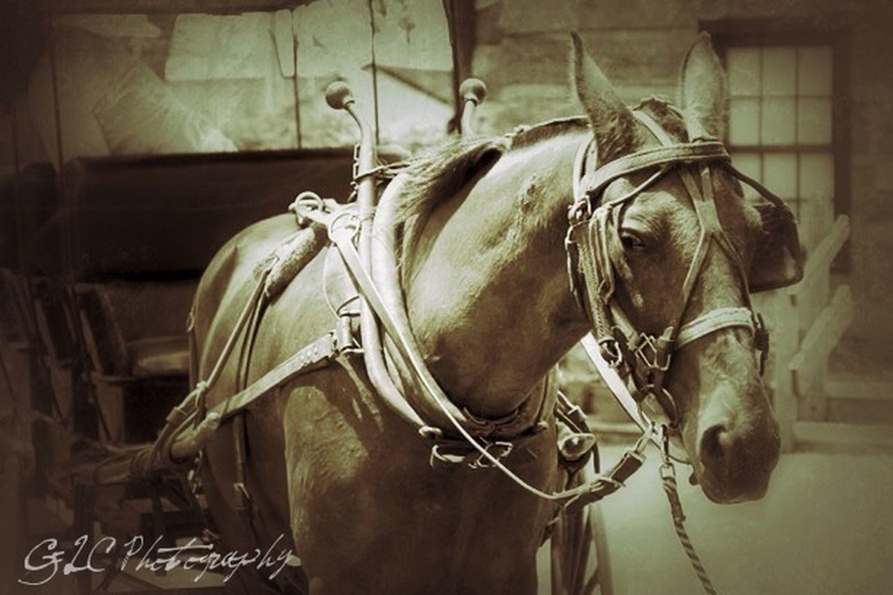 horse, domestic animals, animal themes, mammal, horsedrawn, horse cart, no people, day, livestock, close-up, outdoors