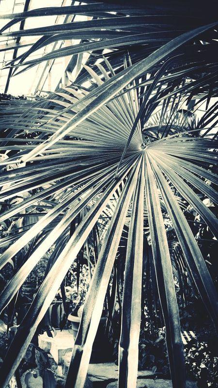 Palms Monochrome Greenhouse Rockford Illinois