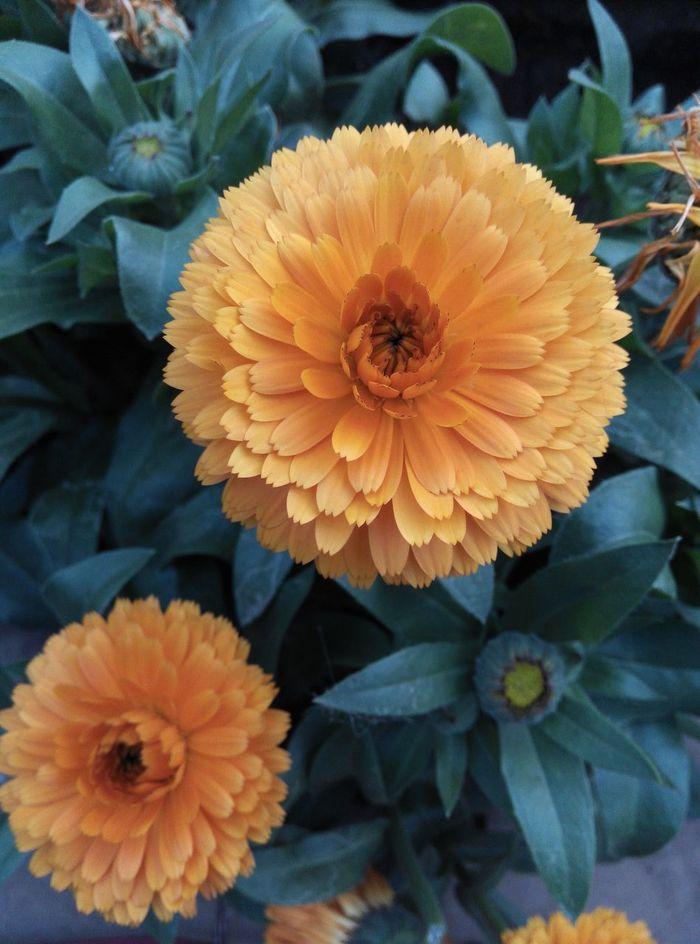 distinguished petals i stumbled upon.