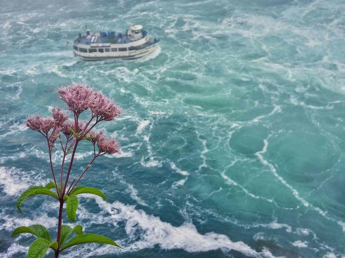 Niagara Falls Flower