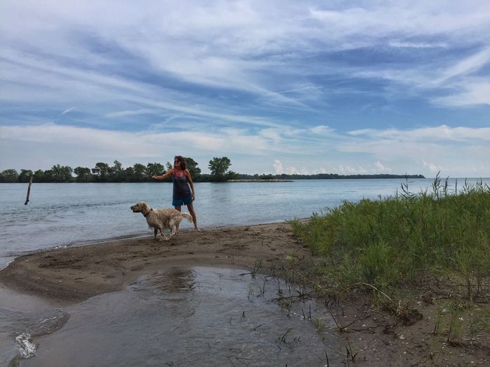 Playing fetch on the beach Sugar Island On The Beach Michigan Summer Detroit River English Setter Playing With My Dog Fetch Fetching The Stick Fetching