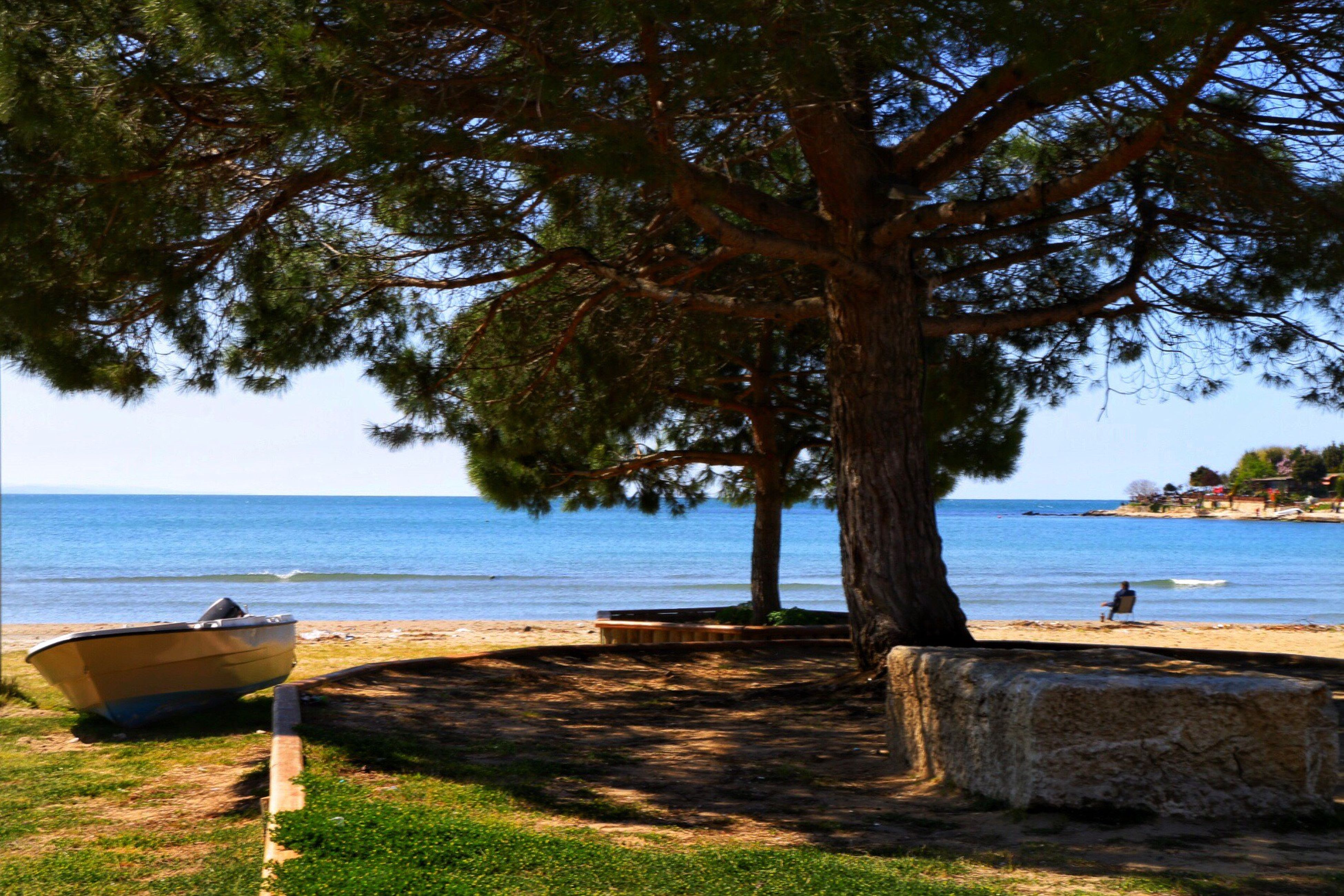 tree, water, sea, tranquility, tranquil scene, scenics, horizon over water, beauty in nature, nature, tree trunk, beach, bench, sky, shore, growth, sunlight, idyllic, grass, relaxation, day