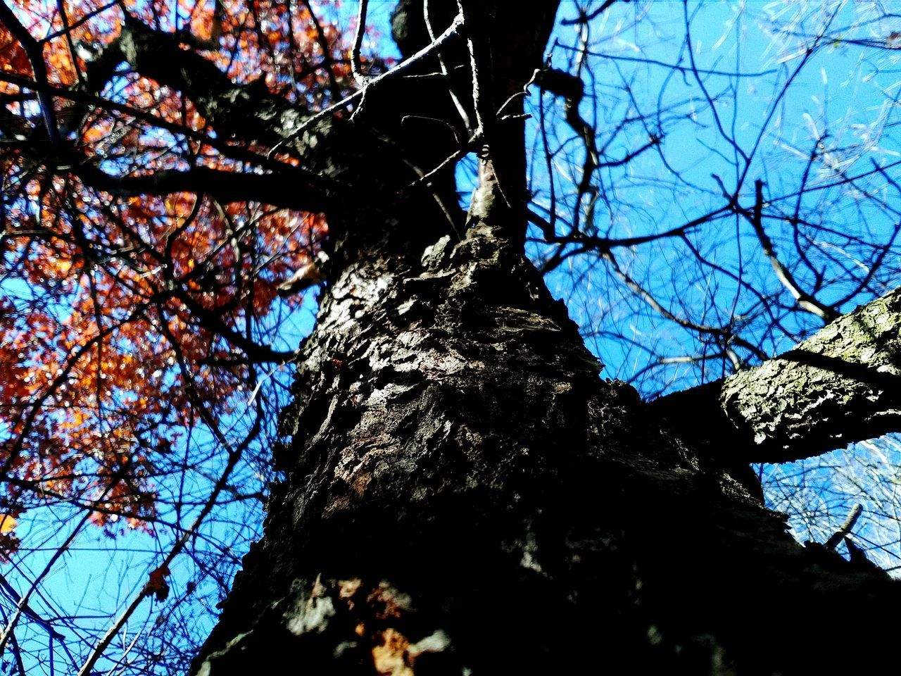 Tree Low Angle View Nature Branch Sky Growth Beauty In Nature Outdoors Tree Trunk No People Tranquility Day HelloEyeEm EyeEm Nature Lover Check This Out 😊 Outdoor Pictures My Photography 2016♡ Hello World ✌My View November Mother Nature Is Amazing Growth Walking Around Taking Pictures In The Woods!