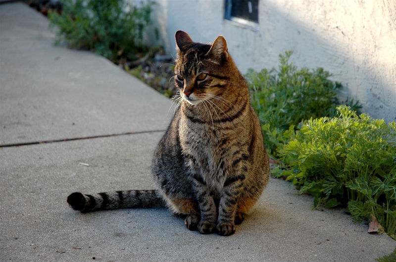 Animal Themes Cat Domestic Animals Domestic Cat Feline Looking Away Pets Portrait Sitting Tabby Natures Diversities. Fremont