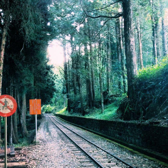 Alishan Taiwan Forest Trees Train Railway OpenEdit Popular Photos Nature