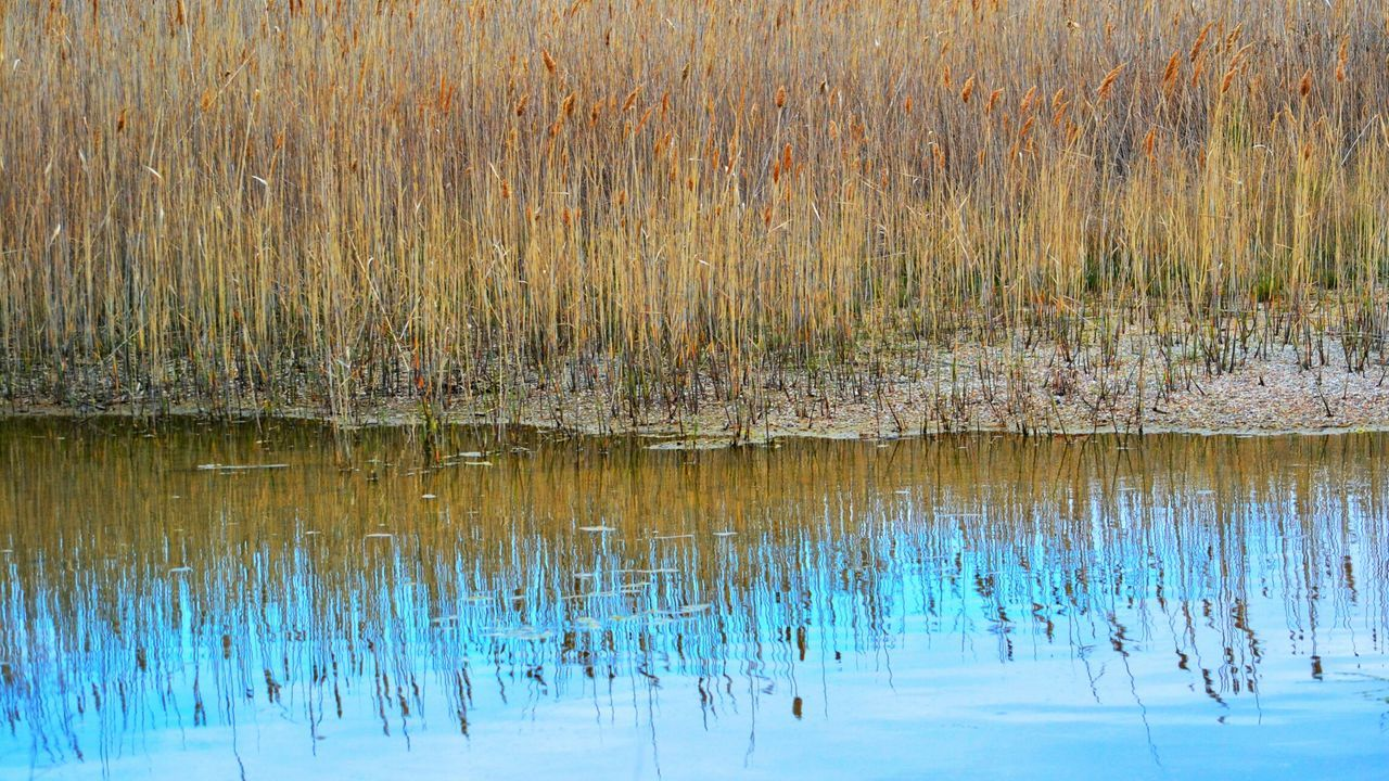 Reflection Water Spring Time Spring Springtime Nature Beauty In Nature Outdoors Backgrounds Pattern Rural Scene Growth Plant Bulrush Bulrushes