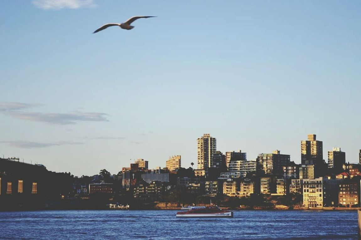 Bird In Flight Mobilephotography Travel Photography Mobilephoto Pictue Perfect Eyeem Sydney Urbanphotography Urban Picturesque Sydney Australia Sunset Panoramic View Sydneyharbour Sydney CBD Sydney, Australia EyeEm EyeEm Best Shots EyeEm