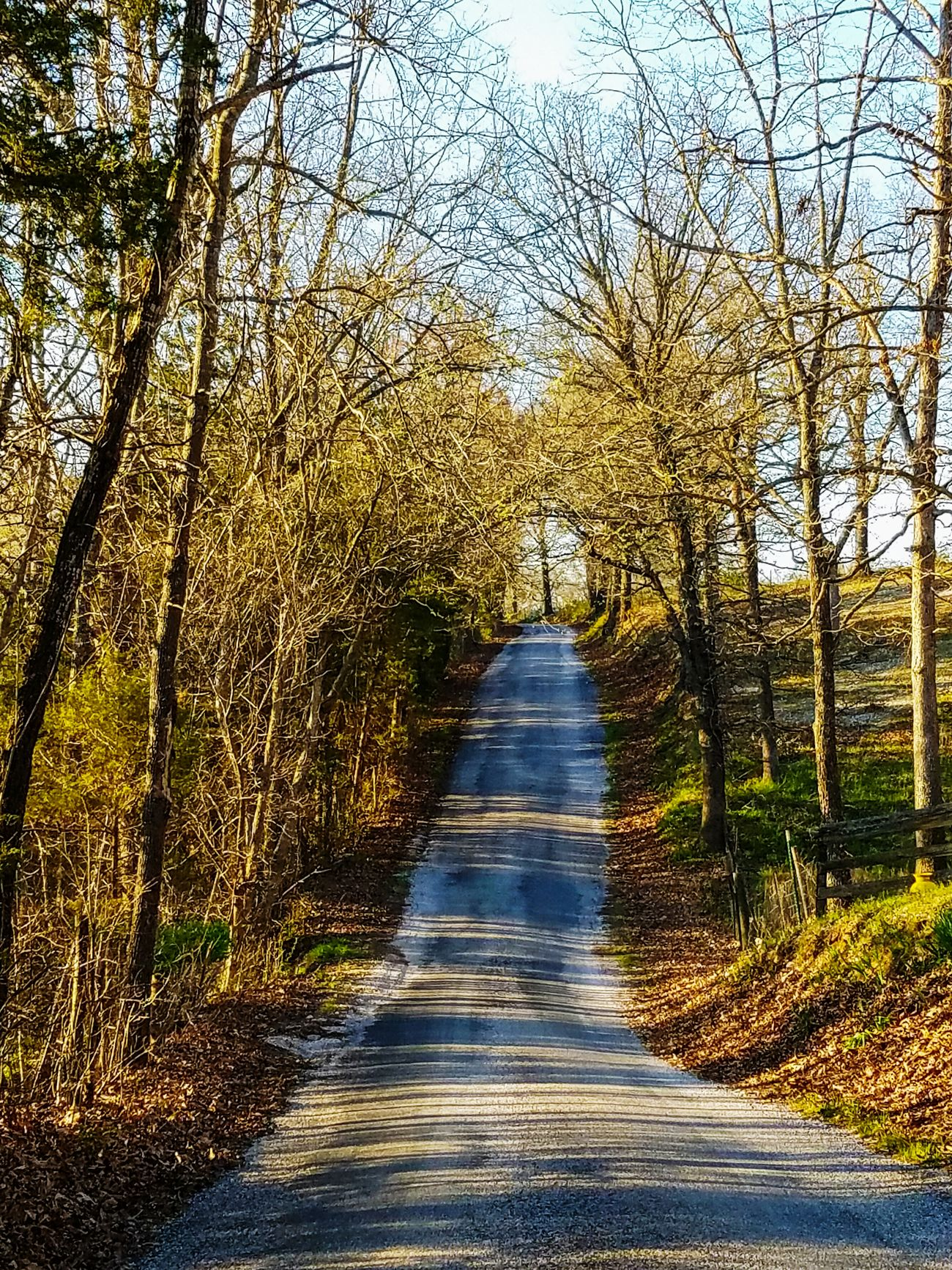 Tree lined road. Tree The Way Forward Nature Outdoors No People Beauty In Nature Sky Empty Road Fall Season Warm Colors Fall Collection Tree Roads Naturelover Naturephotography Nature At Your Doorstep Dead Leaves Backroads Branches bare trees Roadside Backroad Photography Backroad Fall_collection Changing Seasons