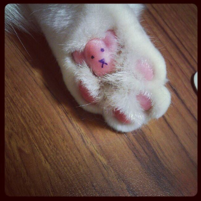 Cat Paw Bear Myhairykid