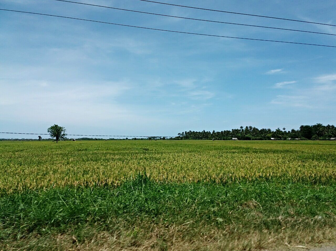 "Miles Away "" land of rice field Nature Landscape Agriculture Culture Tradition Wonderful Indonesia"