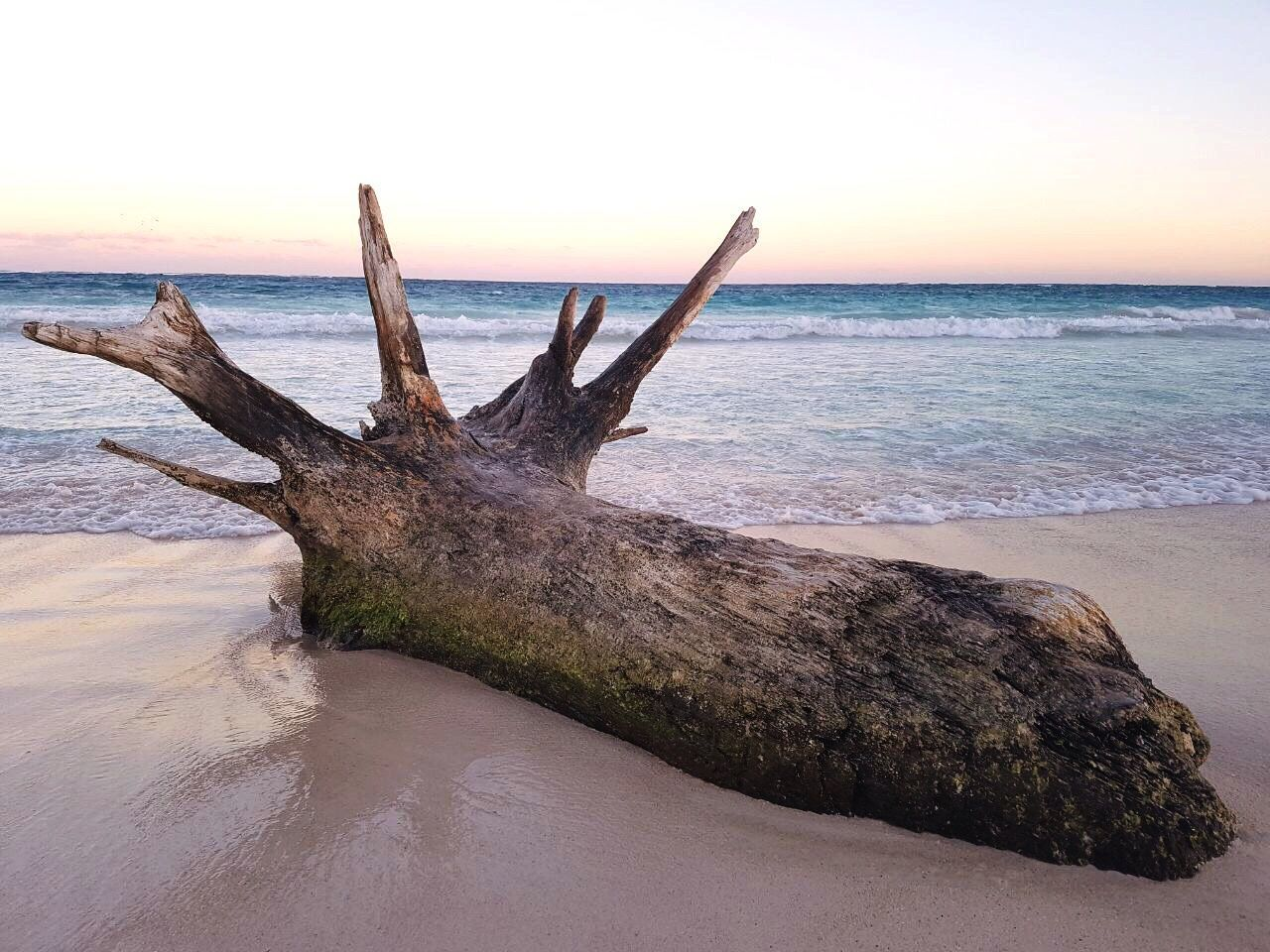 sea, horizon over water, beach, nature, water, beauty in nature, sunset, scenics, sand, no people, outdoors, sky, day, tree, close-up, mammal