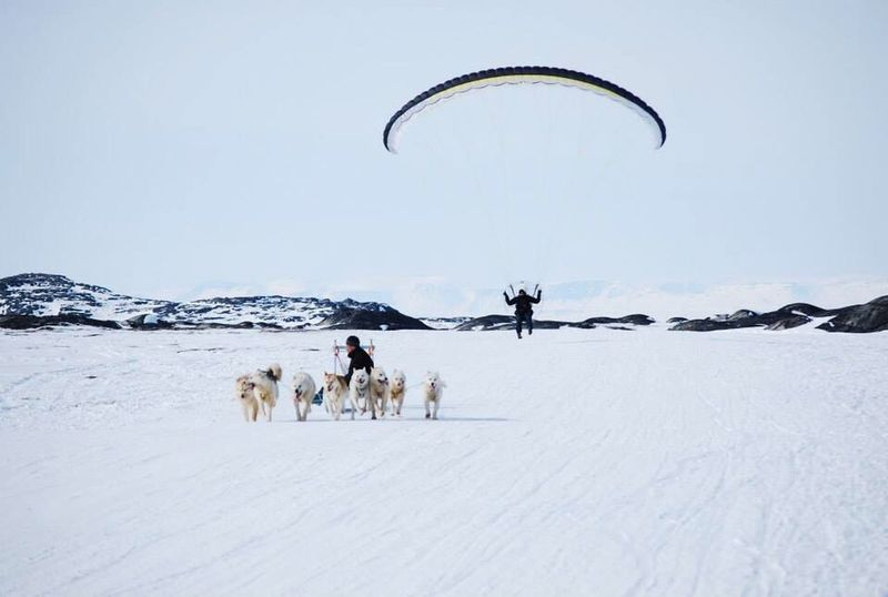 Adventure Club Wonderfuld Greenland Hanging Out Check This Out Happy Dog