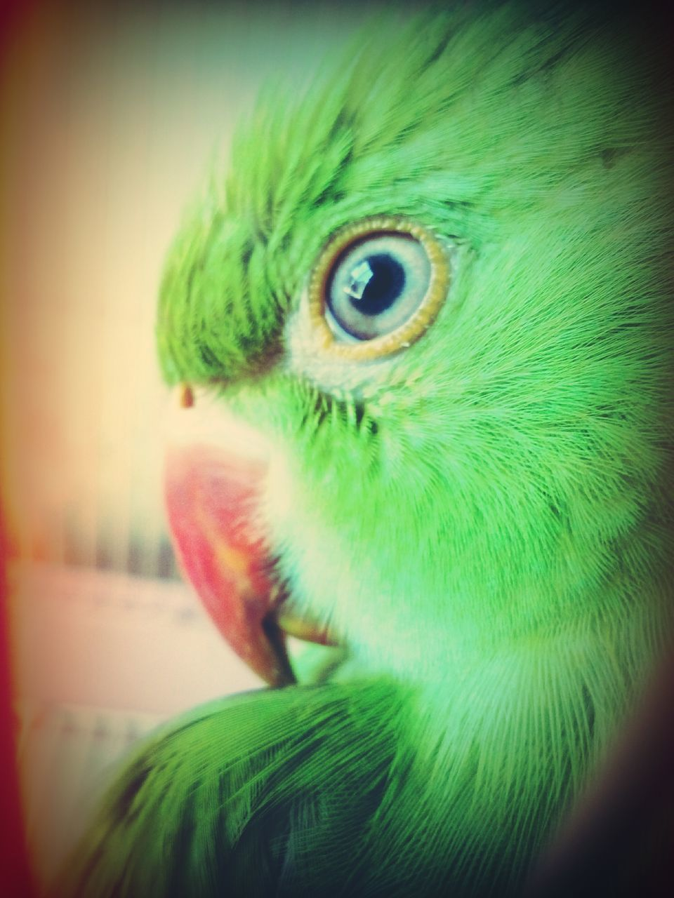 one animal, animal themes, close-up, green color, bird, animals in the wild, animal head, vignette, no people, animal wildlife, parrot, indoors, day, nature, eyeball