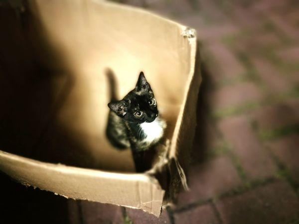 Cat Pets Domestic Cat Looking Cute