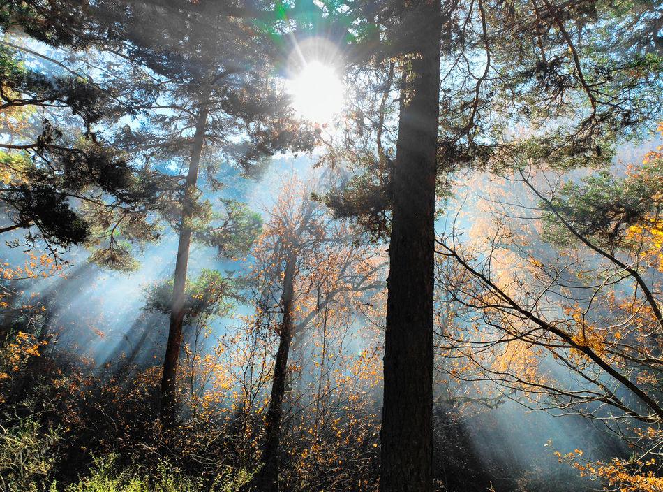 Beauty In Nature Fog Forest Lens Flare Nature Outdoors Sun Sunbeam Sunlight Tranquility Tree Light And Shadow Lights Sun Light Through Trees Sun Light Reflection Sun Lights
