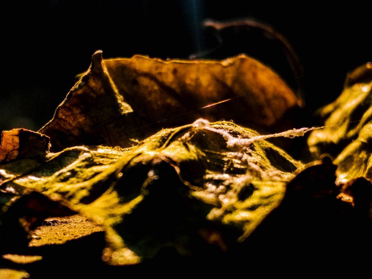 EyeEmNewHere Close-up Nature Leaf 🍂 Leafes Leaf