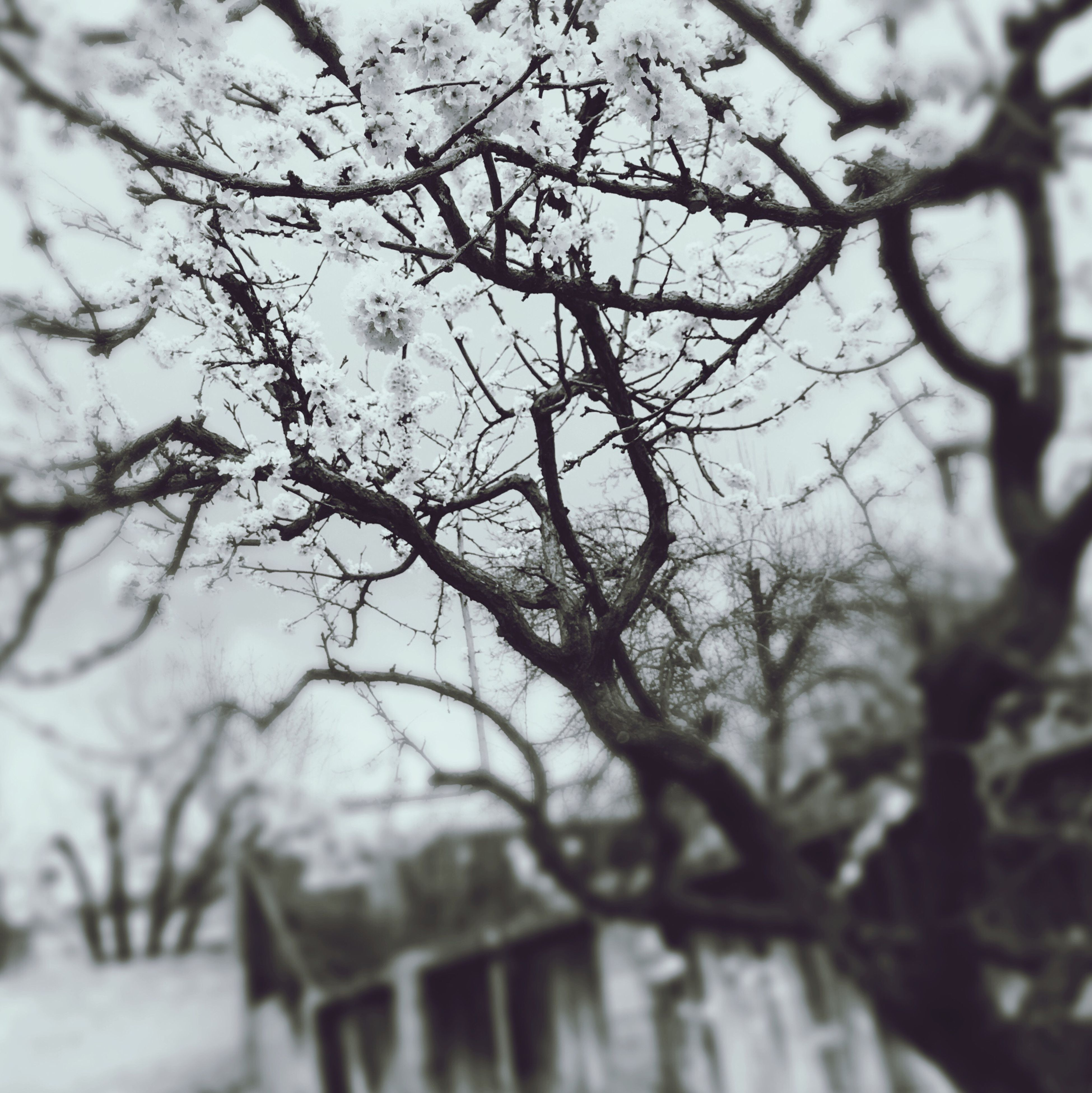 branch, tree, focus on foreground, bare tree, selective focus, nature, season, close-up, winter, growth, tranquility, day, twig, outdoors, low angle view, beauty in nature, cold temperature, no people, snow, sky