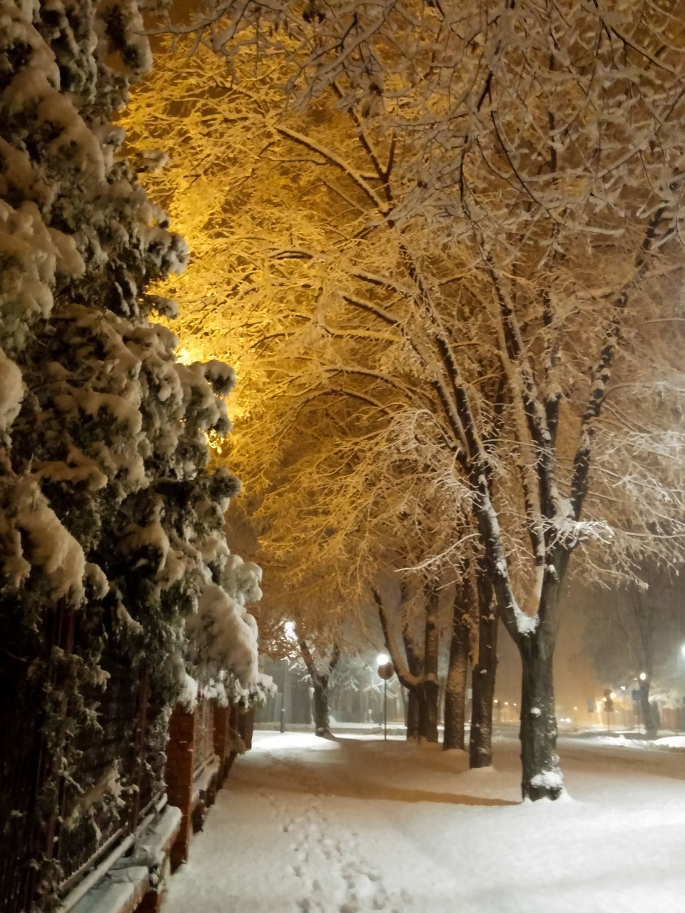 winter, snow, cold temperature, nature, tree, no people, architecture, bare tree, illuminated, beauty in nature, outdoors, day